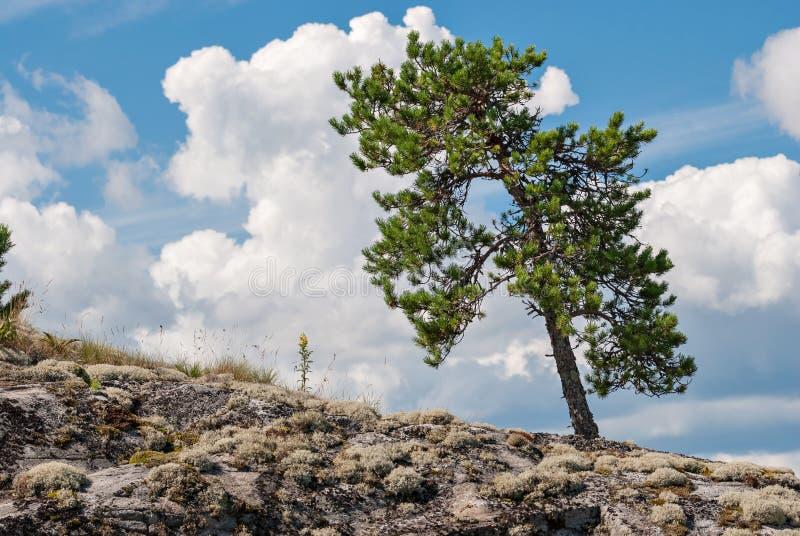 Trädet på lutningen royaltyfria bilder