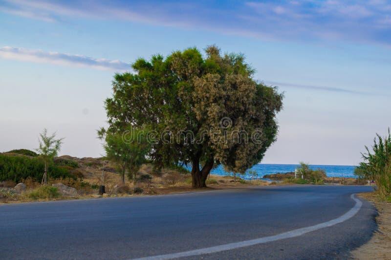 Trädet på vägrenen royaltyfri foto
