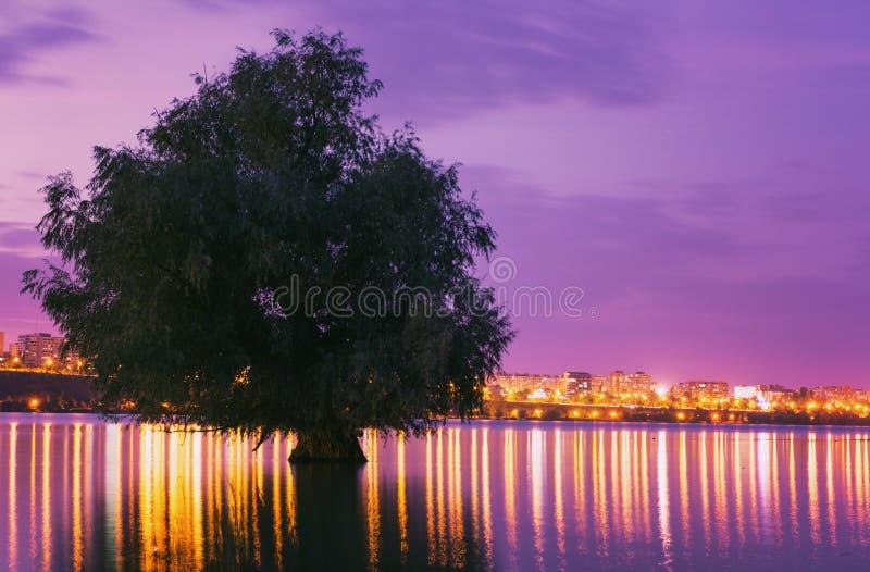 Trädet reflekterade i vatten med stadsljus i bakgrunden på solnedgången royaltyfri foto