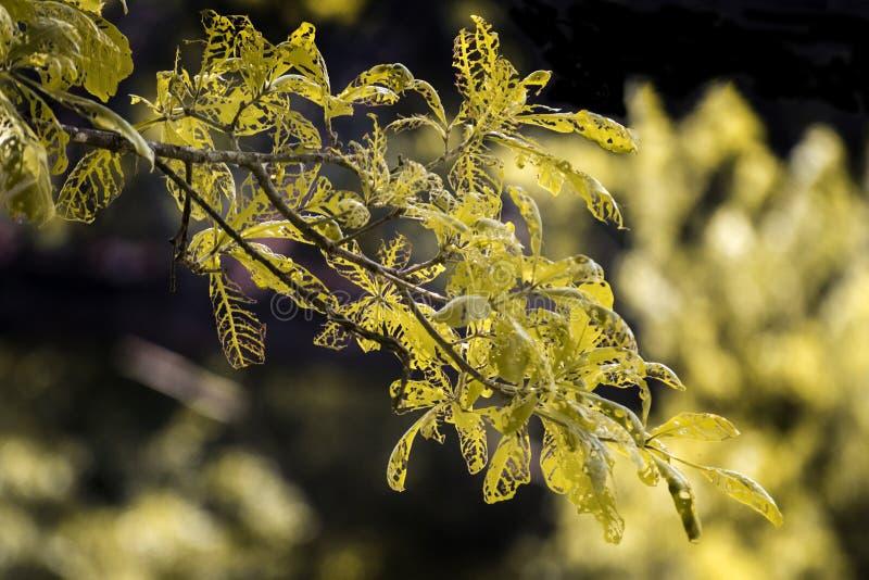 Trädet rotar gör skönhet royaltyfri fotografi