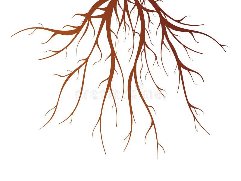 Trädet rotar illustrationen royaltyfri illustrationer