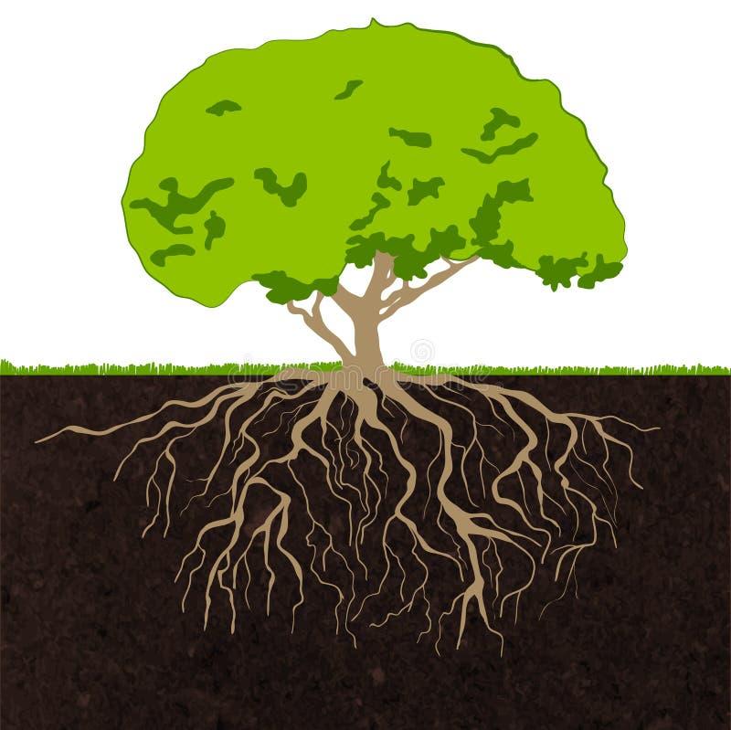 Trädet rotar skissar vektor illustrationer