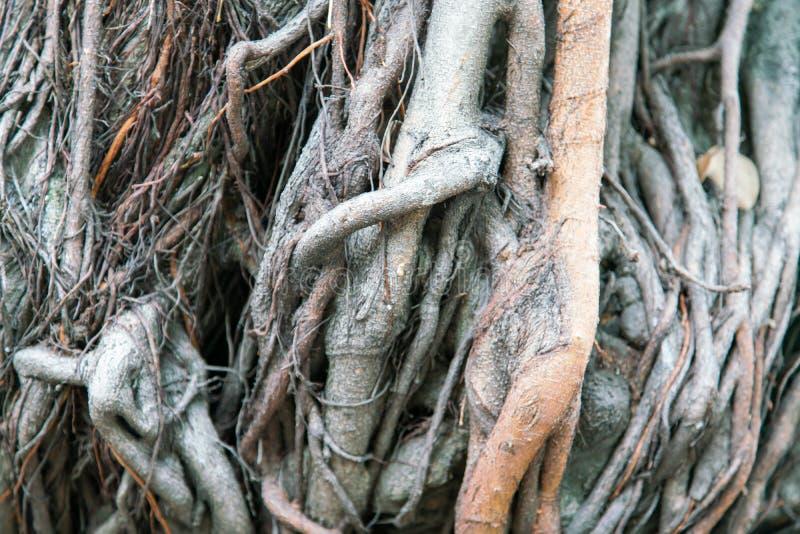 Trädet rotar upp ekväxtslut royaltyfri fotografi