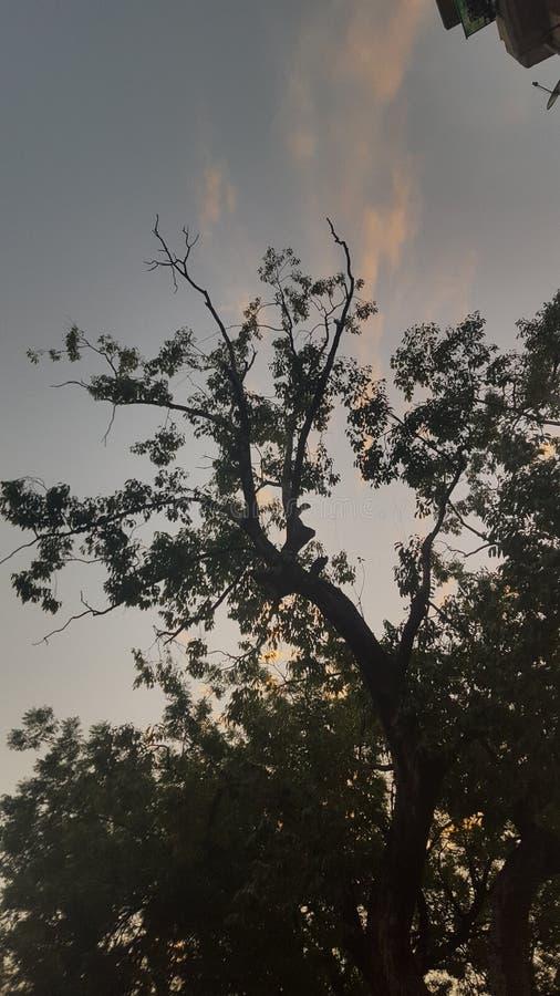 Trädet talar allt fotografering för bildbyråer