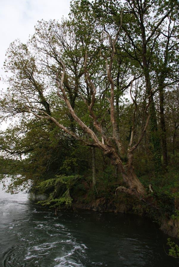 Trädet tillfogar till havet royaltyfri fotografi