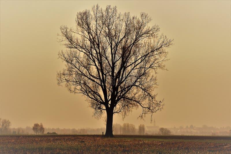 Trädet utan fångade sidor, medan lynnigt, rider ut i december arkivfoto
