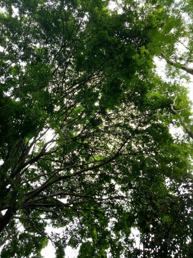Trädförkylningblått arkivfoton