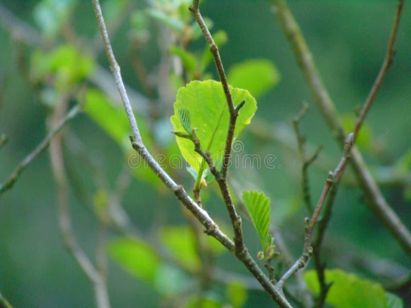Trädfilial i vår royaltyfri foto