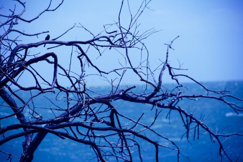 Trädfilial med havet och blå himmel på bakgrund royaltyfri foto