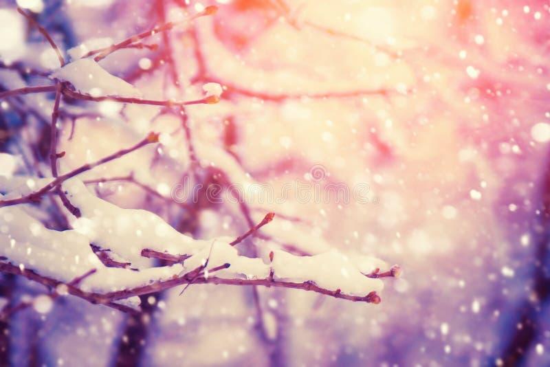 Trädfilial som täckas med snö Vinternaturbakgrund med solsken arkivbild