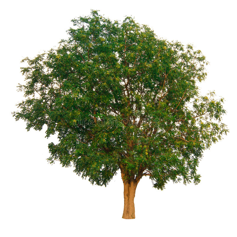 Trädfilialen arkivbild