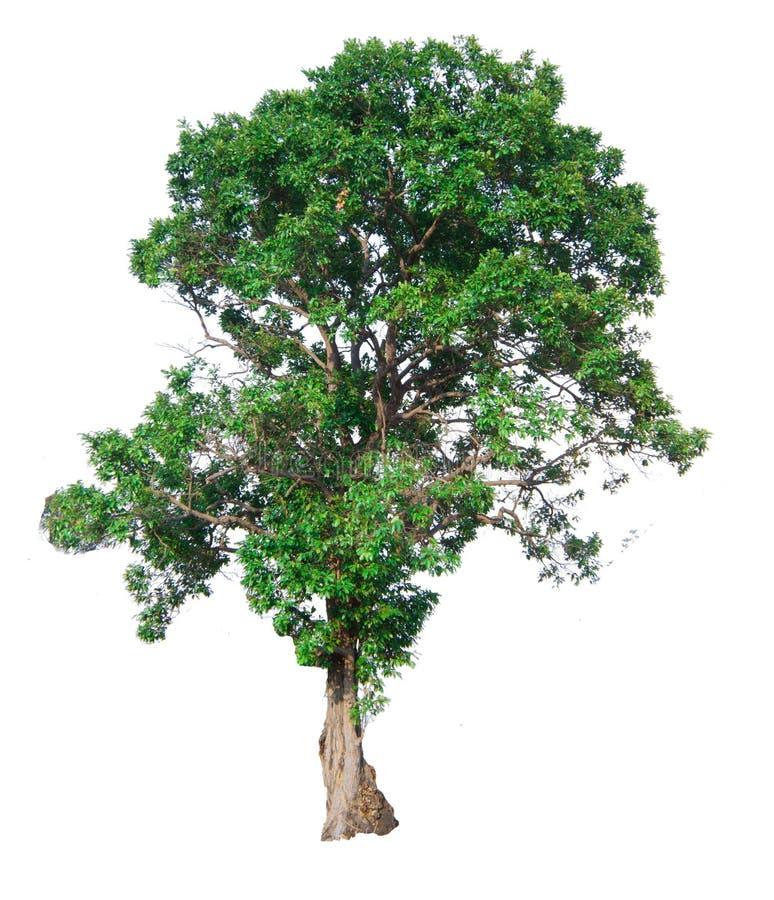 Trädfilialen fotografering för bildbyråer