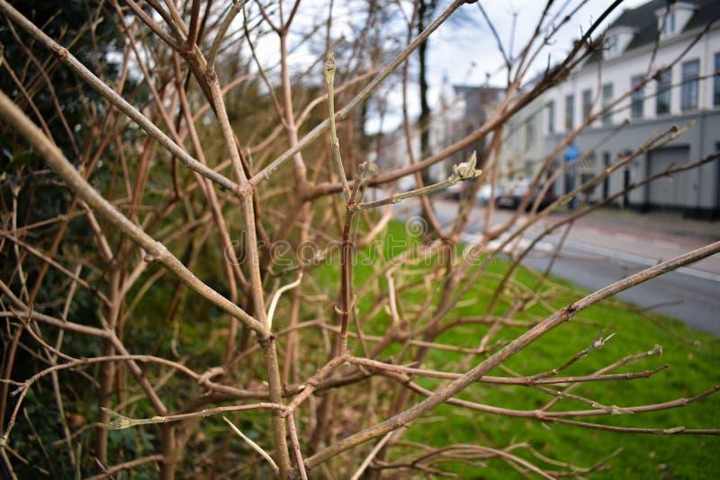Trädfilialer i den närbildHaarlem staden arkivfoto