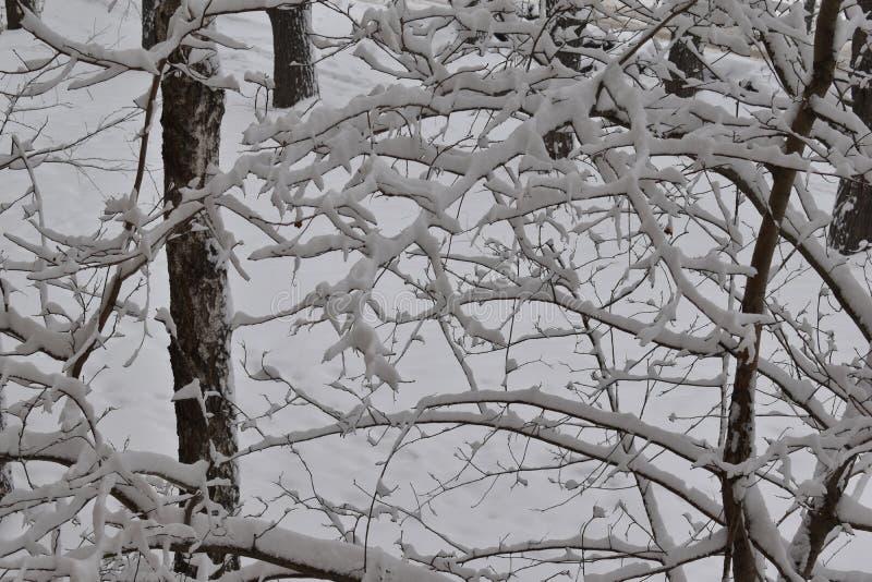 Trädfilialer i den stora snön royaltyfri foto