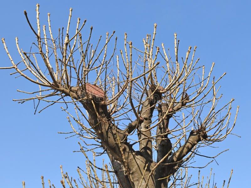 Trädfilialer i vårtid arkivfoton