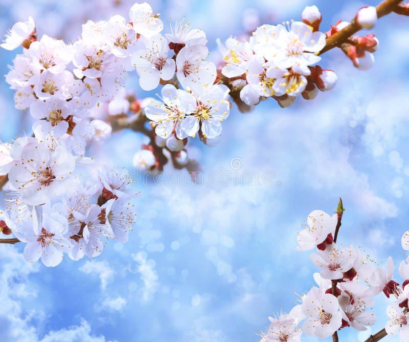 Tr?dfilialer med h?rliga mycket sm? blommor mot bl? himmel F?rbluffa v?rblomningen arkivfoton