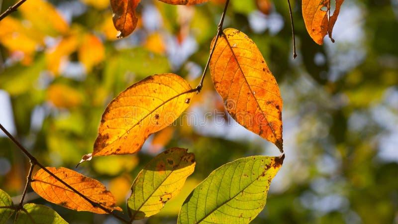 Trädfilialer och sidor arkivfoton