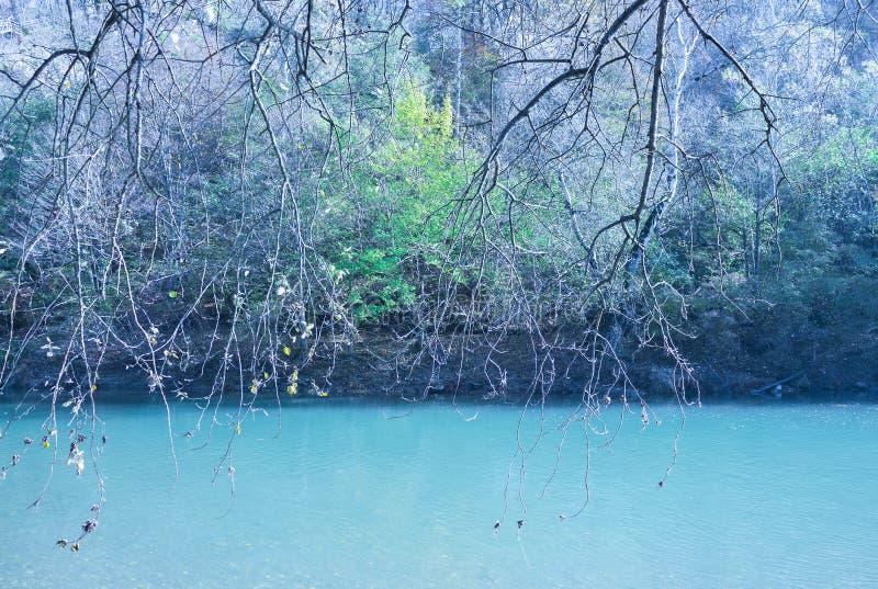 Trädfilialer som hänger över floden mot en stenkust och skog royaltyfri bild