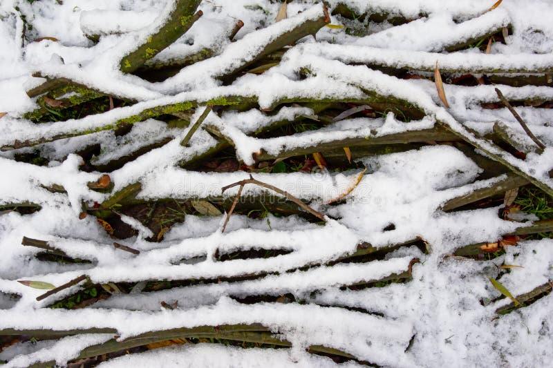 Trädfilialer som lägger på jordningen under snö royaltyfri foto