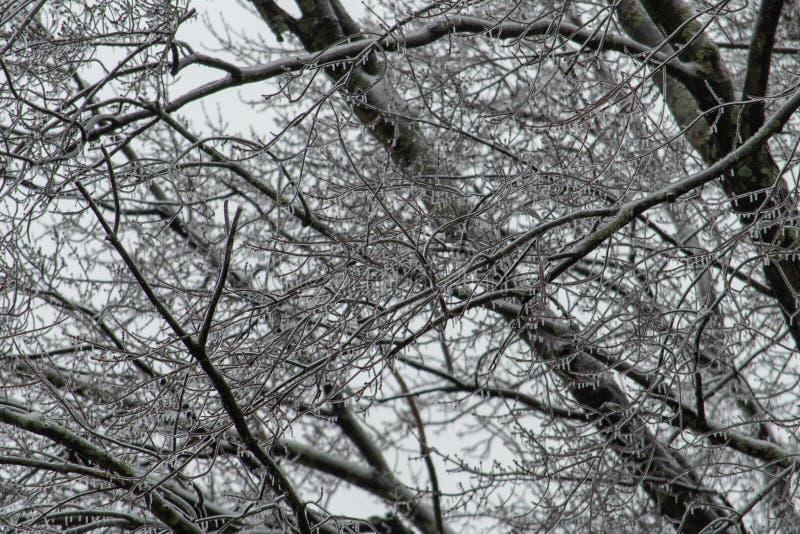 Trädfilialer täckte i is efter vinterstorm arkivfoto