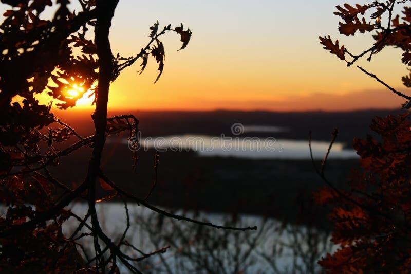 Trädfilialer utan sidor och sjöar i bakgrunden arkivbilder
