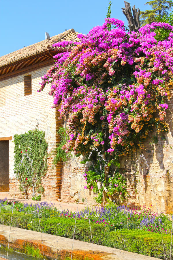 Trädgård av Alhambra arkivbilder