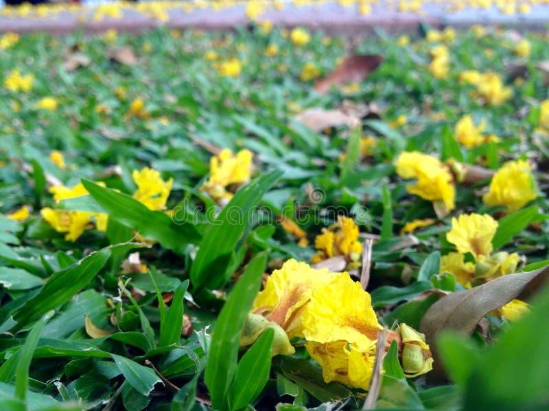 Trädgård av blommor royaltyfri fotografi