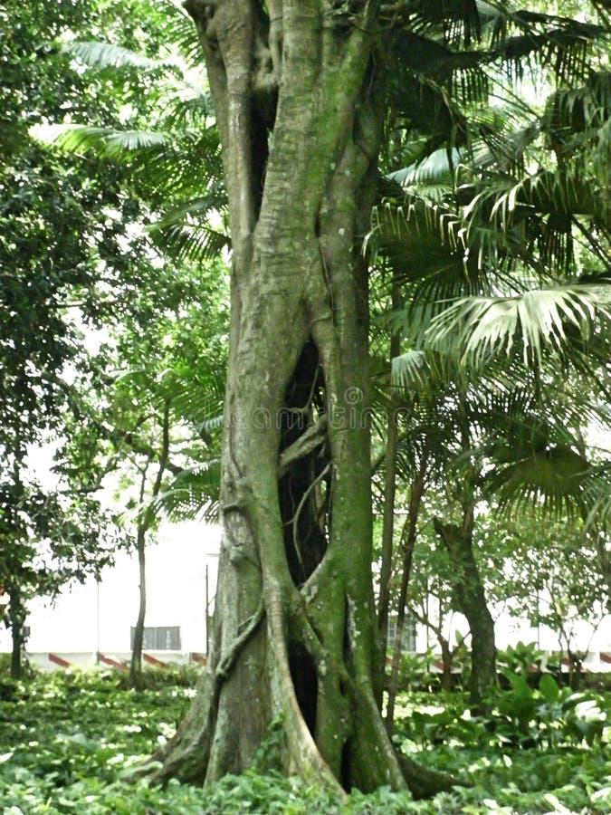 Trädgård av det koloniala ursprunget arkivfoto