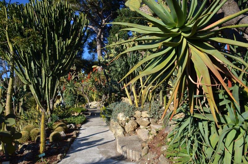 Trädgård av exotiska växter, villa Rothschild, Cap Ferrat, franska Riviera, Frankrike fotografering för bildbyråer