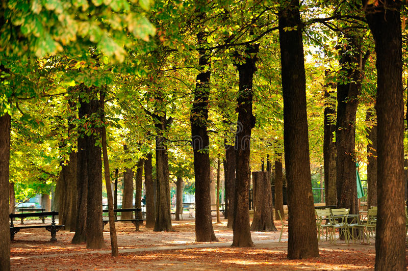 Trädgård av Luxembourg, Paris royaltyfria bilder