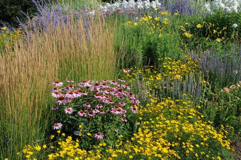 Trädgård av vildblommor arkivbild