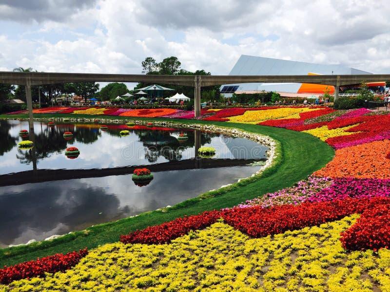 trädgård för epcotfestivalblomma royaltyfria foton
