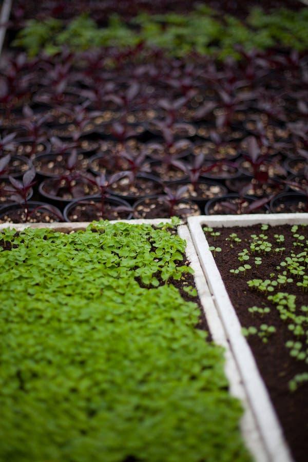 Trädgård för ny grönsak royaltyfria foton