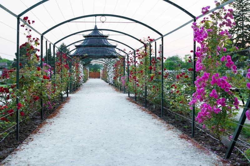 Trädgård för ros för Esterhazy slott` s, Fertod royaltyfria bilder