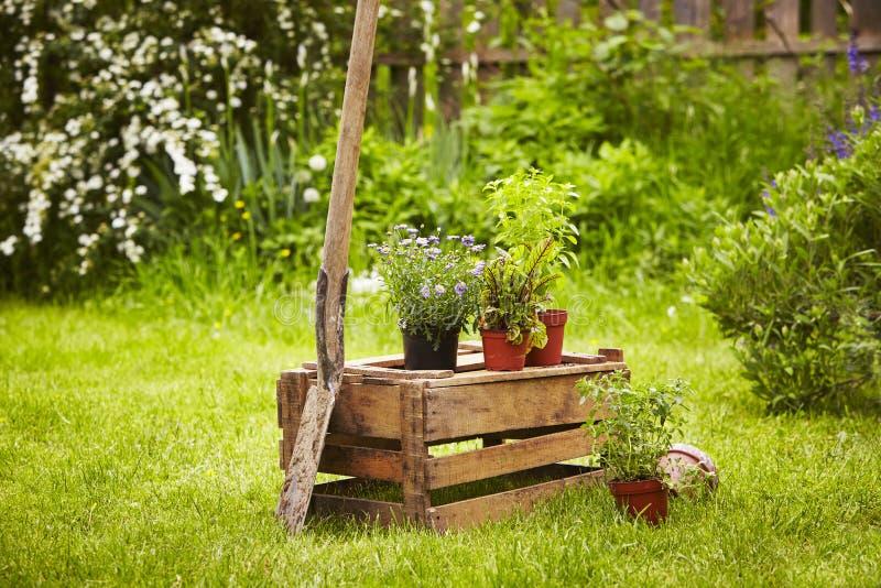 Trädgård för träaskspadesugrör royaltyfri bild