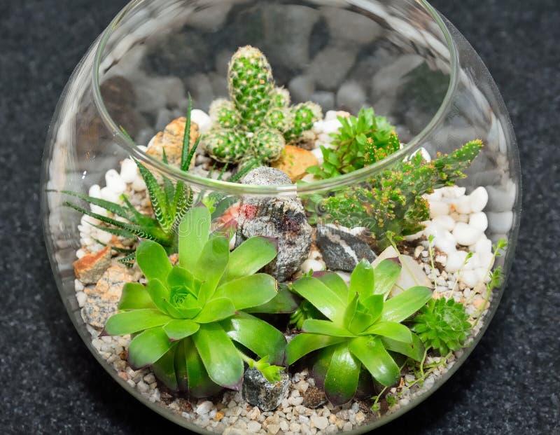 Trädgård för växt för tabellöverkant dekorativ arkivfoto