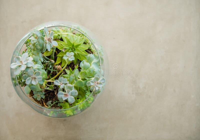 Trädgård för växt för tabellöverkant dekorativ i en glass vas royaltyfri fotografi