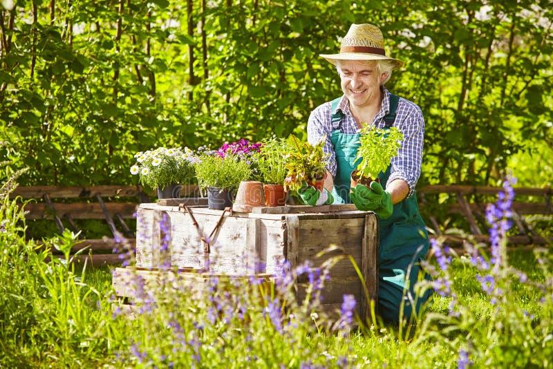 Trädgård för växter för trädgårdsmästareStraw hatt royaltyfria foton