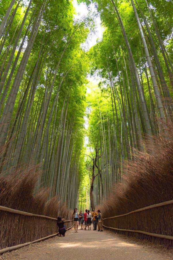 Tr?dg?rd f?r Zen f?r Arashiyama bambudunge, en naturlig skog av bambu i Arashiyama, Kyoto arkivfoto