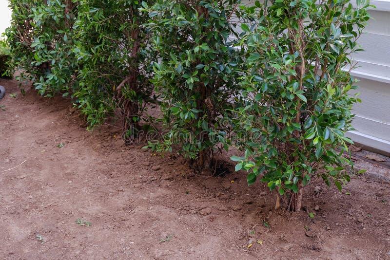 Trädgård gårdarbete som planterar trädet och gräs royaltyfri fotografi