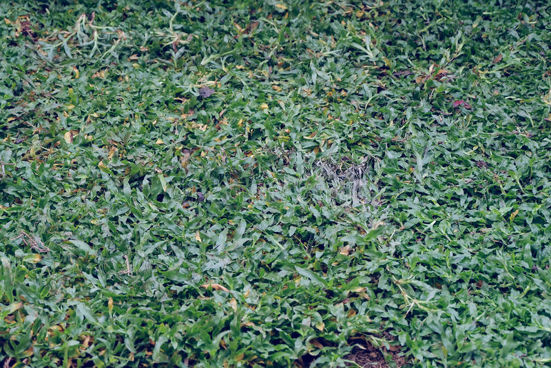 Trädgård gårdarbete som planterar trädet och gräs fotografering för bildbyråer
