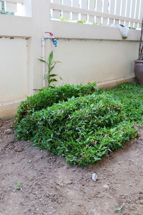 Trädgård gårdarbete som planterar trädet och gräs arkivbild