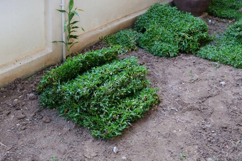 Trädgård gårdarbete som planterar trädet och gräs royaltyfri foto