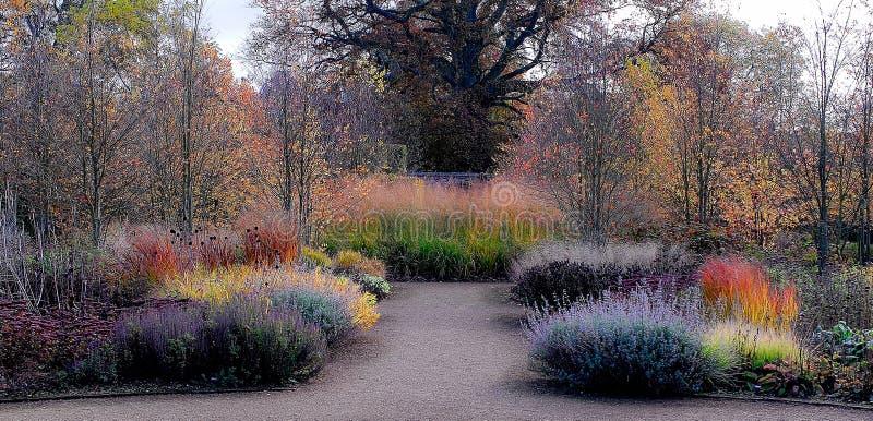 Trädgård i höstfärger royaltyfri fotografi