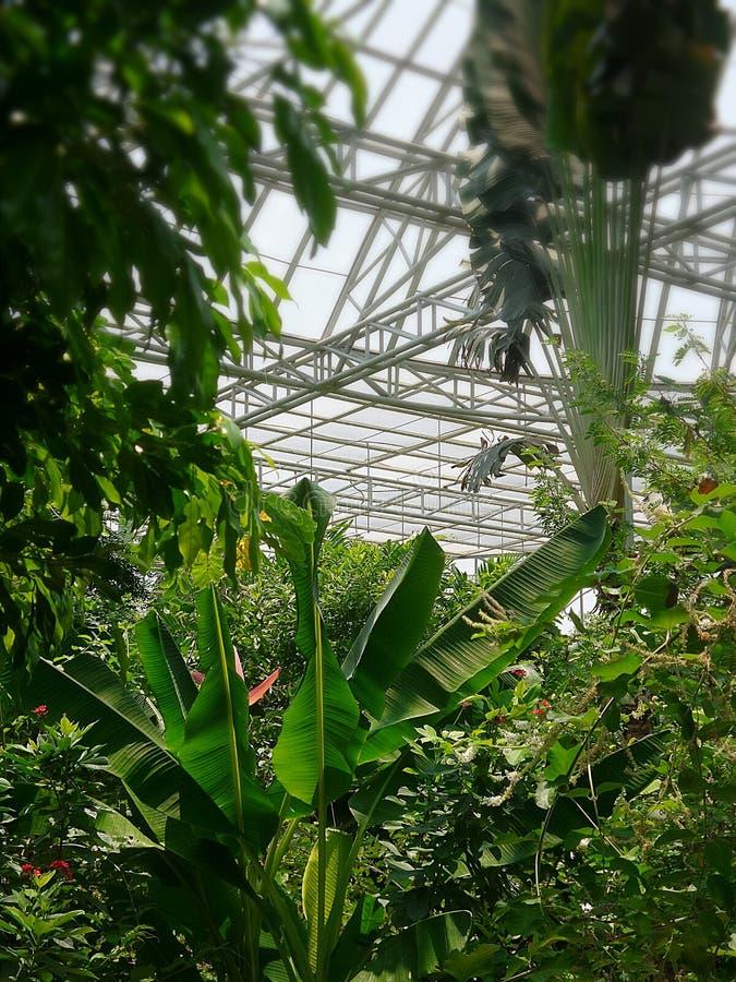 Trädgård i kupol av den Bangkok fjärilsträdgården och insectariumen royaltyfri foto