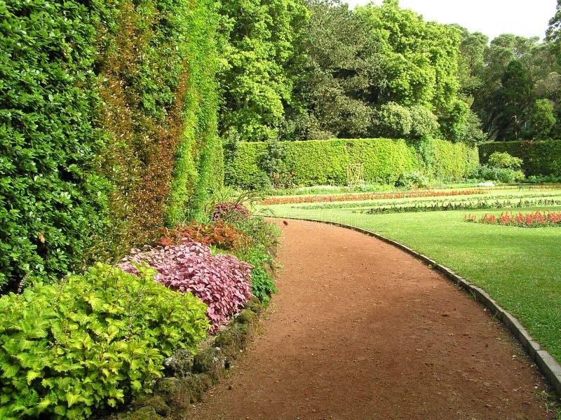 Trädgård i Sao Miguel royaltyfria bilder