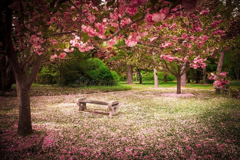 Trädgård i vår arkivfoto