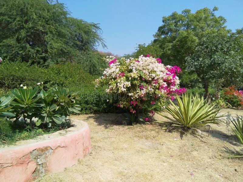 Trädgård med en härlig sikt arkivfoton