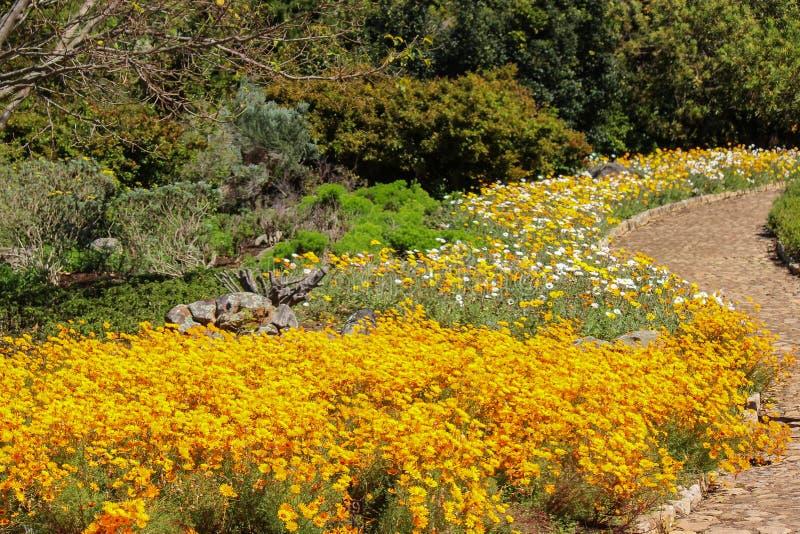 Trädgård med gula floweres och suddighetsbakgrund royaltyfria foton