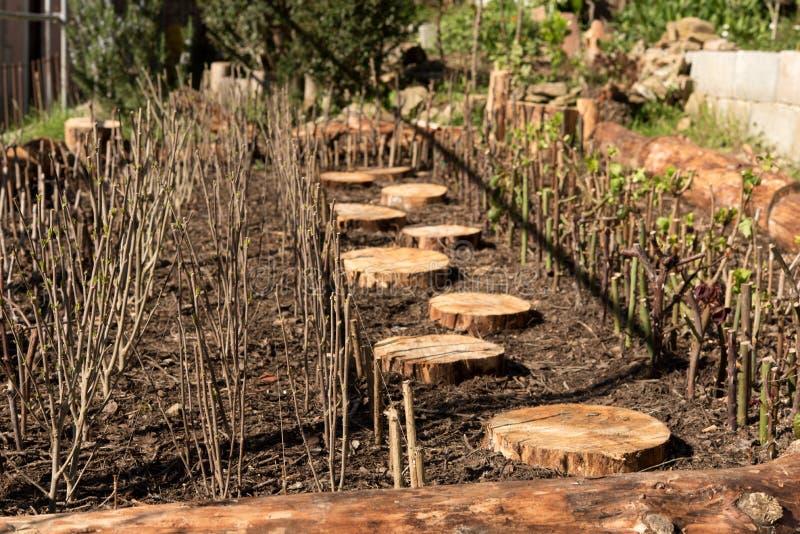 Trädgård med kneg arkivbilder